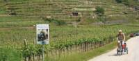 Cycling with trailer in the Wachau Valley, Austria | Kate Baker