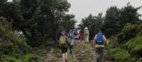 Hiking amongst heather on the Camino, Spain | Andreas Holland