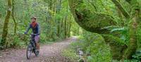 Cycling the magical paths of Rowrah along the Coast to Coast in England   Andrew Bain
