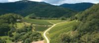 Vineyard in the Vosges Mountains, Alsace region