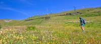 Hiker surrounded by beautiful alpine flowers on the Tour de Monte Rosa Walk | Andrew Bain