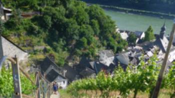 Hiking trail through the vineyards next to the Rhine River