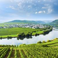 Vineyards on the Moselle river