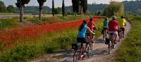 Cycling from Bolzano to Verona through the Po Delta Park