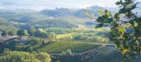 The rolling hills of Tuscany, Italy   Chris Viney