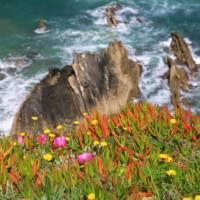 Wildflowers & cliffs along Portugal's Rota Vicentina | John Millen