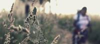 Spider web on the Camino | @timcharody