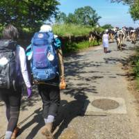 Pilgrims hiking through rural villages along the Camino Frances in Spain | Gesine Cheung