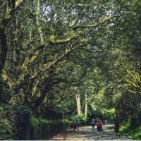 Walking along the Camino de Santiago trail in Galicia | @timcharody