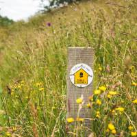Waymarking on the Cotswold Way | Tom McShane
