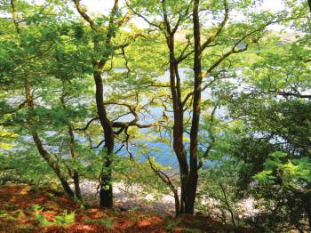 Sunny woodland on the shore of Coniston Water&#160;-&#160;<i>Photo:&#160;John Millen</i>