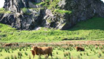 Dungalss Hill and Highland cattle | John Millen