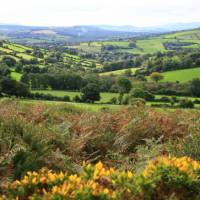 Bucolic countryside around the Wicklow Way   John Millen