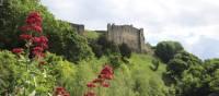 Looking downstream through Valerian flowers to Richmond Castle | John Millen