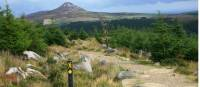 Trail  and waymarking on Wicklow way |  <i>John Millen</i>