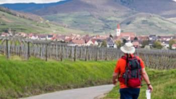 Hiking between the vineyards of Alsace | Charles Hawes