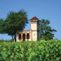 Vineyards above Meursault