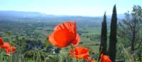 Find poppies on a summer walk around Gordes