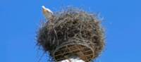 For many centuries, storks have been prominent in Alsace. | Charles Hawes
