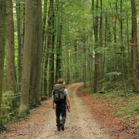 Walking through the Beech Forests of Bavaria | Will Copestake