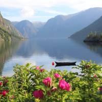 Aurlandsfjord   John Millen