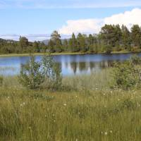 Ustedalsfjorden and cotton grass   John Millen