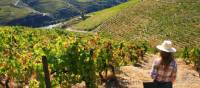 Vineyards above the Douro Valley