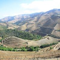 Vineyards high above the Pinhao River