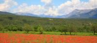 Poppies near Ainsa