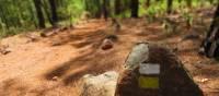 Trail Waymark on la Palma trails | John Millen