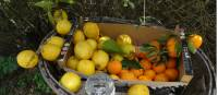 Honesty box oranges and lemons |  <i>John Millen</i>