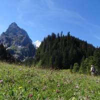 Stunning views across alpine meadows   Jon Millen